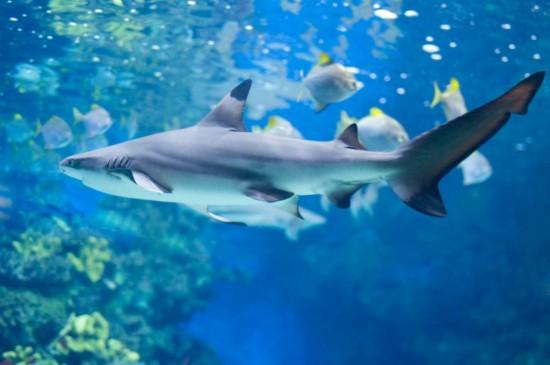 Лондонский аквариум2