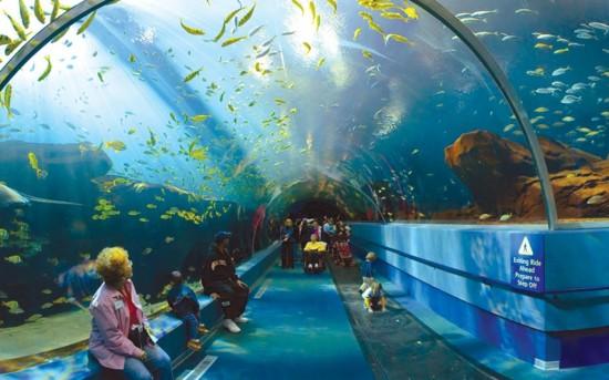 Лондонский аквариум5